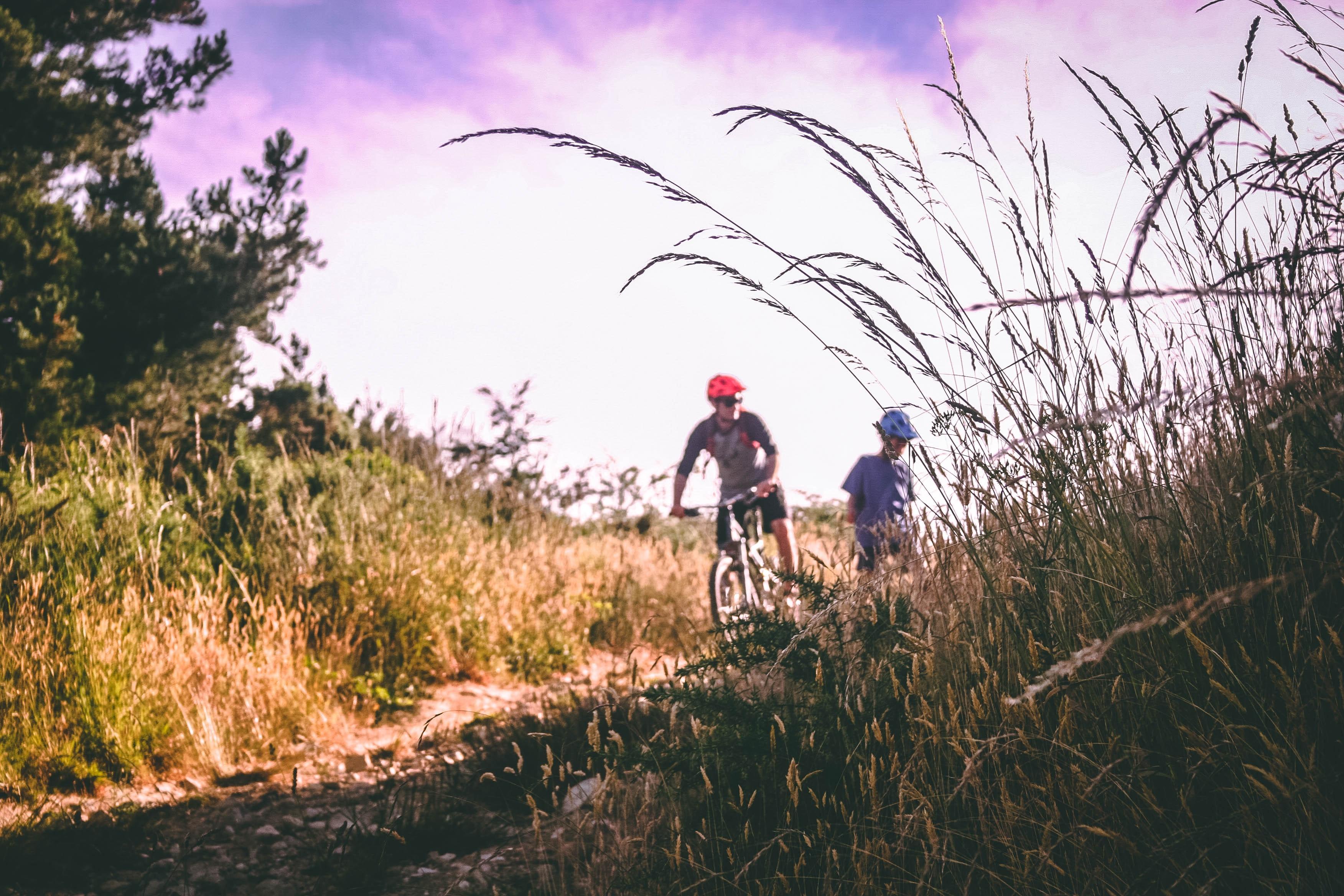 bicycle-bike-bikers-733741